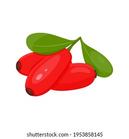 vector illustration of barberry berries on white background
