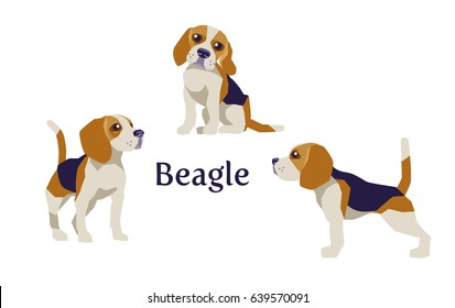 Vector illustration of Beagle in different poses isolated on white background.