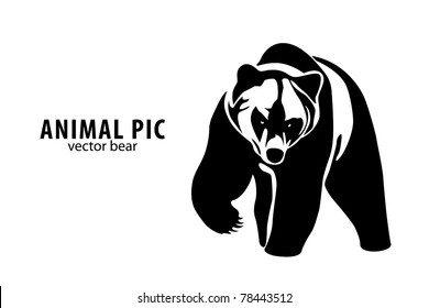 vector illustration of a bear on white background