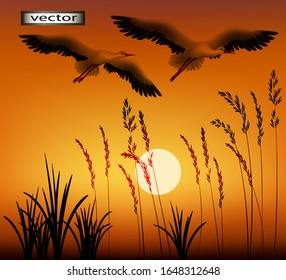 Vector illustration of a beautiful bright sunset cranes and storks flying over a field of grass