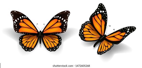 Vector illustration of beautiful butterflys.