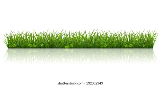 Vector illustration with a beautiful green grass