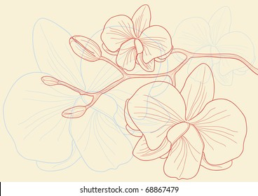 Vector illustration of beautiful orchid flowers