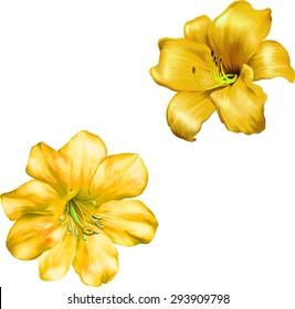 Yellow Bell Flowers Images Stock Photos Vectors Shutterstock