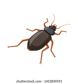 Vector illustration of beetle and garden icon. Set of beetle and bug vector icon for stock.