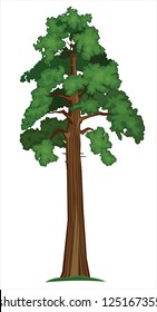 Vector illustration of Big Sequoia Tree