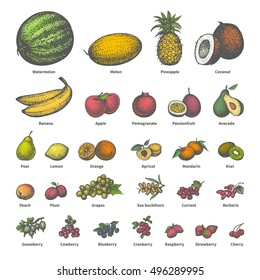 Vector illustration of a big set of different colored juicy ripe fruit with names. On an isolated white background. Drawing hand-drawn sketch doodle. Vintage retro style. The concept of dietetic food.