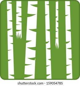 Vector illustration of birch trees in a forest
