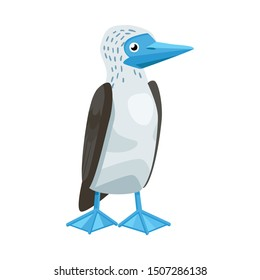 Vector illustration of bird and booby symbol. Graphic of bird and blue vector icon for stock.