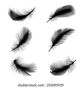 Vector illustration of bird feathers