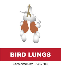 vector illustration of bird schematic lung anatomy. perfect for educational purpose