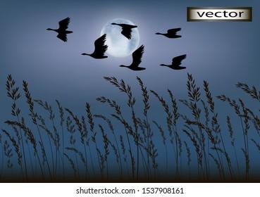 Vector illustration of birds flying away night flight of birds over field, moon light and grass