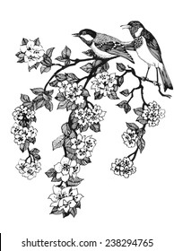 Vector illustration of birds on branch of cherry tree on white background