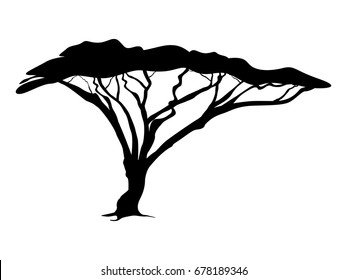 Vector illustration of a black acacia silhouette. Isolated white background. Icon acacia tree side view profile.