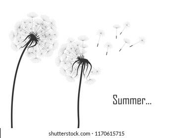 vector illustration of black dandelion  silhouettes on white background