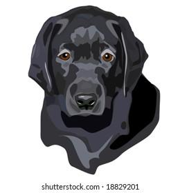 Vector illustration of black lab puppy portrait.