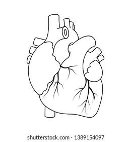 Vector Illustration, Black outline real heart on white background