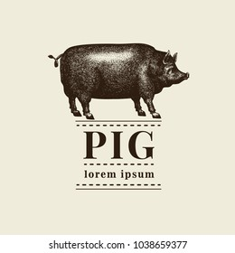 Vector illustration of black pig silhouette. Retro engraving style. Sketch farm animal drawing. Logo template.