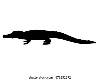 Vector illustration black silhouette crocodile. Isolated white background. Icon animal crocodile side view profile.