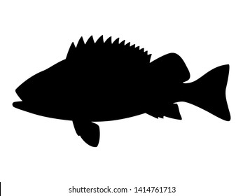 Vector illustration of black silhouette of sea bass. Isolated white background. Seabass logo icon, side view profile.