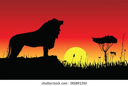 Vector illustration of black silhouette of a snarling lion on a rock. Against the background of the sunset in savannah