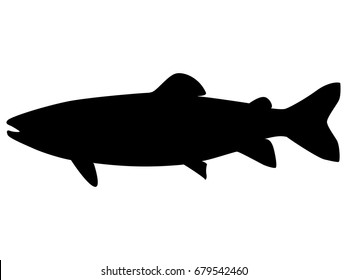 Vector illustration of a black silhouette trout. Isolated white background. Icon fish trout side view profile.