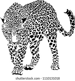 Vector illustration of black and white leopard