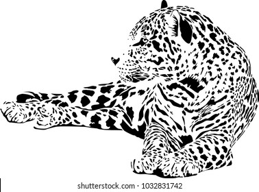 Vector illustration of  black and white of lying Jaguar