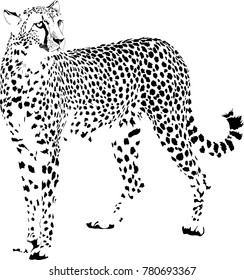 vector illustration of black and white stationary cheetah