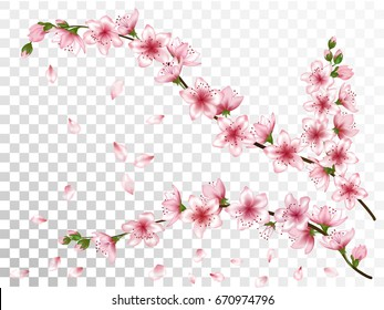 Vector illustration of bloom branch with pink flowers, buds, petals flying. Realistic design isolated transparent background. Blooming tree twigs set, blossom collection. Flower tree branches.