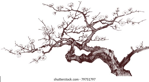 Vector illustration of a Blossoming Cherry Tree (inked drawing)