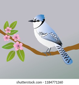 A vector illustration of a blue jay. He is sitting on a branch with pink blossom.