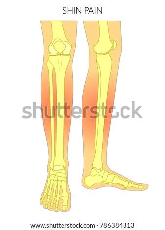 Vector Illustration Bones Human Legs Anterior Stock Vector (Royalty ...