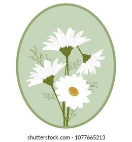 Vector illustration of a bouquet of chamomiles in a frame. Template for the design of postcard, cosmetic and medical product.