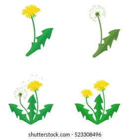 Vector illustration bouquet of dandelions with leaves. Summer flower collection, set. Yellow dandelion. Dandelion vector icon, logo.