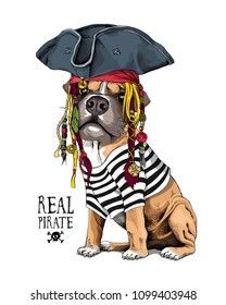 Vector illustration with Boxer Dog in a striped cardigan, captain hat, bandana and with a dreadlocks. Real pirate - lettering quote. Poster, hand drawn style t-shirt print.