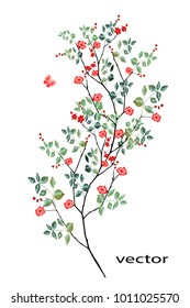 vector illustration of branch with leaves and flowers. Botanical illustration.Red rose.