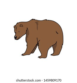 vector illustration brown bear predator wild animal on white