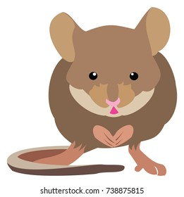 Vector Illustration of a brown mouse facing forward