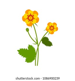 Vector illustration of a buttercup isolated on white in a flat style. Summer field flower.