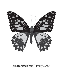 Vector illustration of butterfly cartoon on white background