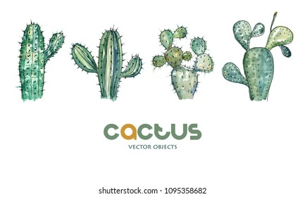 Vector illustration. Cactus collection. Pen drawing with watercolor style background. Vector objects set.