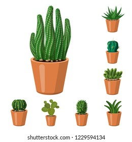 Vector illustration of cactus and pot logo. Set of cactus and cacti stock symbol for web.