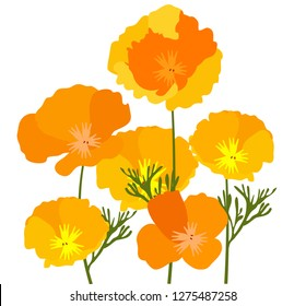 vector illustration of California state yellow and orange poppies.