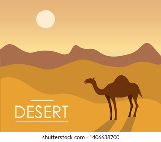 Vector illustration of a camel in the sunny desert. One-humped camel in the desert with sand dunes. Vector illustration in flat style.