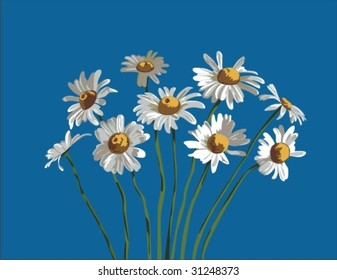 Vector illustration of Camomiles bouquet