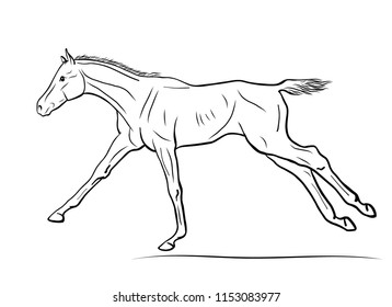 A vector illustration of the cantering foal.