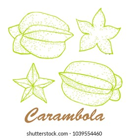 Vector illustration of carambola. Exotic fruit painted.