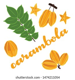 vector illustration of carambola and leaf design isolated with lettering carambola background white and fruit EPS10