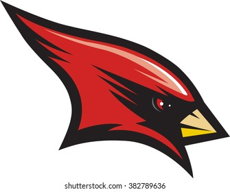 Vector illustration of a cardinal